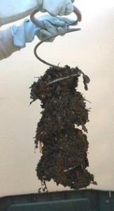 brass-compost-carotte