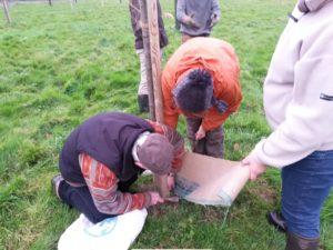 Image de l'article 'Rhabillage des troncs des pommiers'